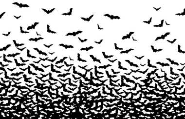 bat-swarming-family-nesting.jpg