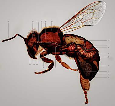 bees14.jpg