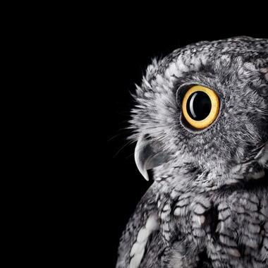 brad-wilson-owl-01.jpg