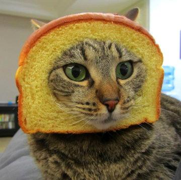 breadedcats.jpg
