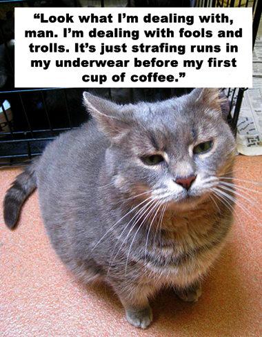 cat-sheen-5.jpg