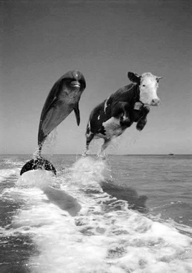 cowjump.jpg
