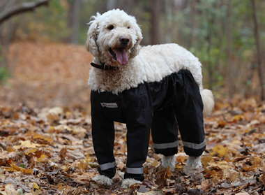 dog-pants-muddy-mutts-dog-apparel-13.jpg