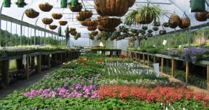 greenhouse_plants.jpg