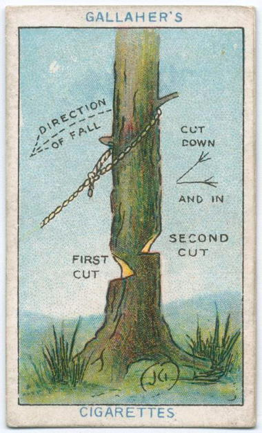 how-to-fell-a-tree.jpg