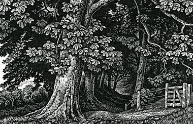 howard_phipps_edge_of_the_wood__broadchalke.jpg