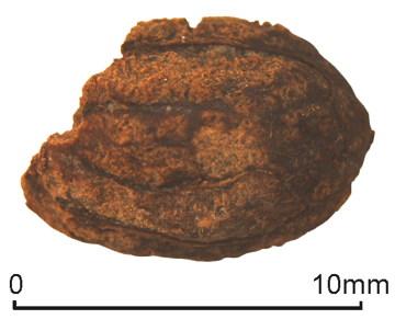 iron-age-olive-pit.jpg