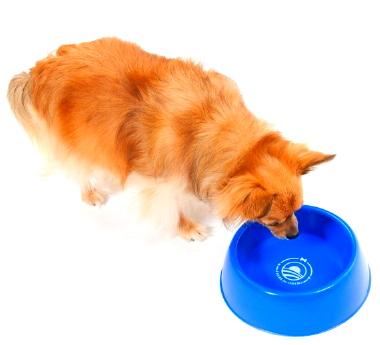 ofa0941_dog_bowl_01-620x620.jpg