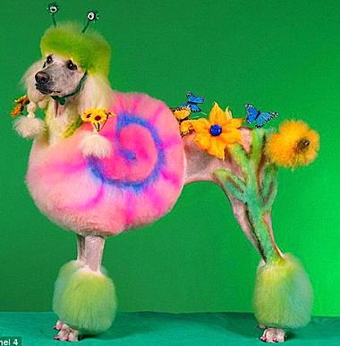 poodle-art-grooming-11.jpg
