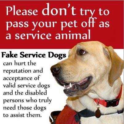 real-service-not-fake.jpg