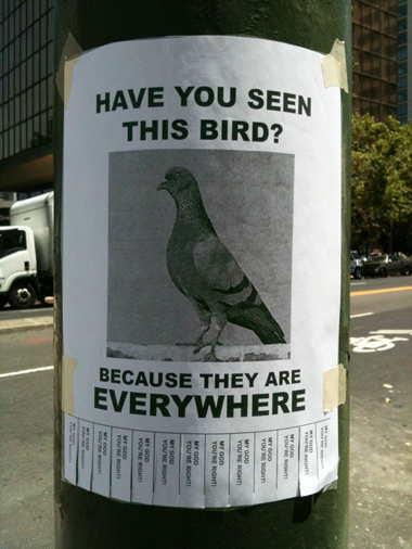 seenbird.jpg