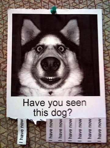 seendog.jpg