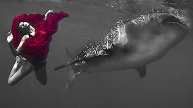 sharkmod3.jpg