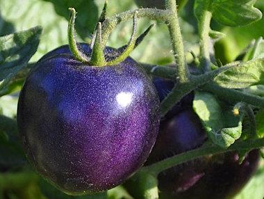 tomato003tw_wide-5dd88835d5110ba8438d9198e4c673ea6be85738-s40-c85.jpg