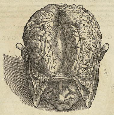 vesalius_brain.jpg