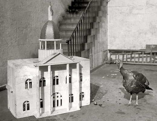turkeywhitehouse.jpg
