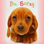 So Sorry: My Boilerplate Apology to Demented Americans I Have Offended, Am Offending, or Will Offend