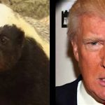 President Honey Badger <i>Really</i> Don't Care