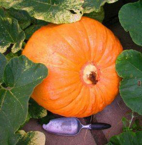 The Big Pumpkin (Dump)