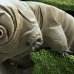 Let's Review 133: From Tardigrades to Wabi-Sabi