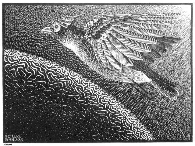 The Creation by M. C. Escher