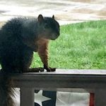 The Squirrel on the Porch by ghostsniper
