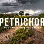 PETRICHOR: Wherein we find that the fine-grained details of His Creation are marvelous to behold