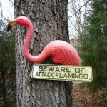 """The Great Flamingo Uprising"""