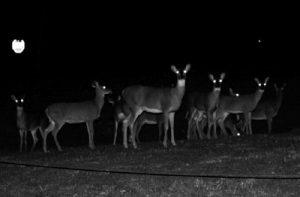Democrat Deer in the Headlights