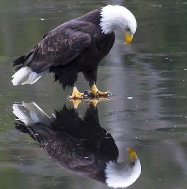 american_reflection