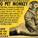Monkey in a Box: Best long read of the year so far