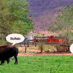 Road Tales: Where the Buffalo Roam