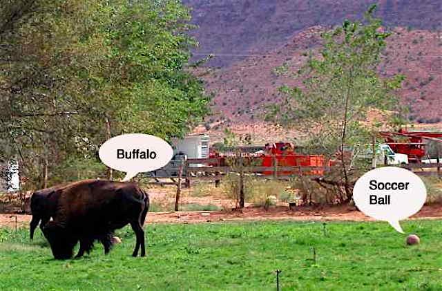 Road Tales: Where the Buffalo Roam